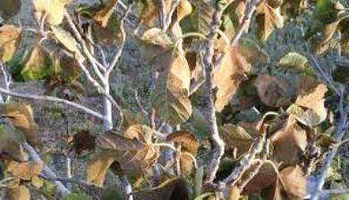 دوار بوعشرين جماعة البريكيين إقليم الرحامنة ...كارثة بيئية خطيرة.