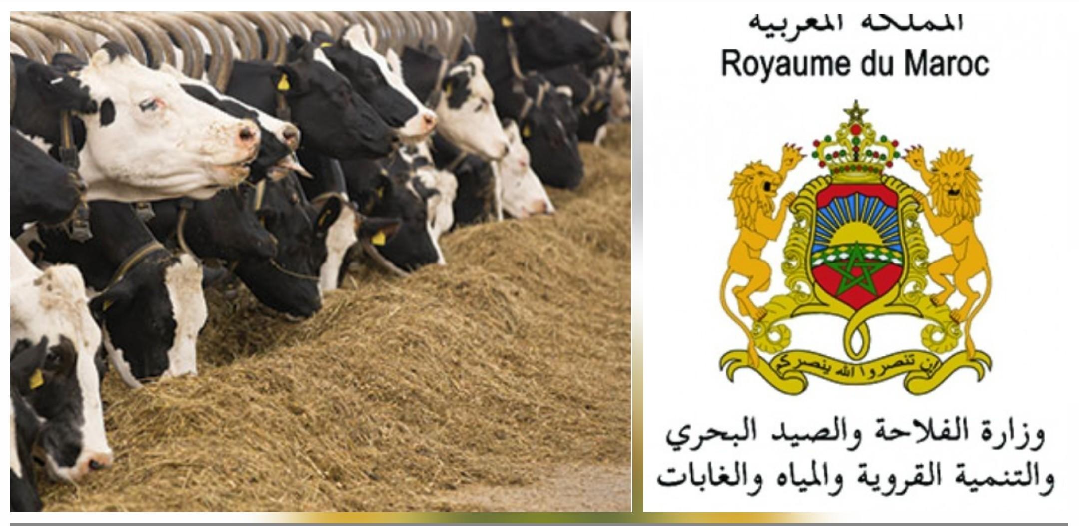 وزارة الفلاحة تطلق برنامجا خاصا لدعم علف الماشية