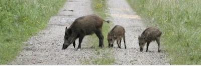 ظهور مخلوقات جديدة في مناطق سوس، والساكنة تتساءل
