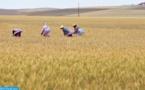 مطالب بالتحقيق في إقصاء فلاحين متضررين من مخاطر الجفاف من تعويض التعاضدية الفلاحية بإقليم الرحامنة
