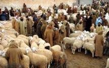 المجلس الحضري لابن جرير...رائحة فساد تفوح من صفقة كراء مرفق سوق الماشية ...إلى من تشير أصابع الاتهام؟